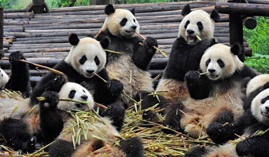China Blog Chengdu Tours