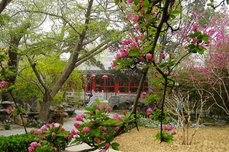 beijing bamboo garden hotel 1